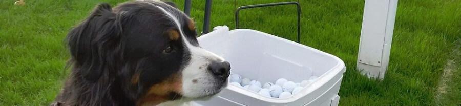 Davos, le chien qui aide les autres animaux