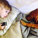 Allergie au chien : symptômes et traitements