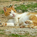 Que faire si mon chat est empoisonné ?