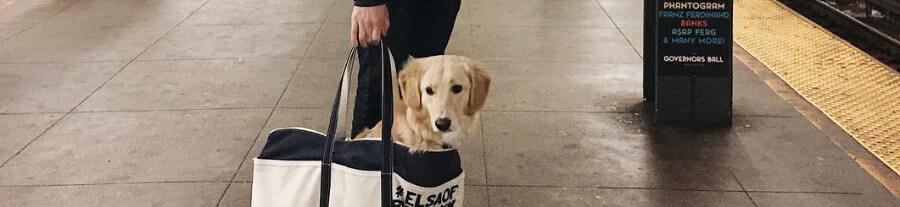Découvrez le nouveau mode de transport des animaux à New York !