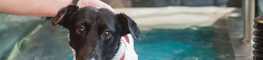 Interview : Alforme, centre de rééducation et de remise en forme pour chien et chat