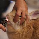 Vétérinaire NAC : comment le trouver et quels sont les tarifs ?