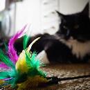 Meilleurs jouets interactifs pour chat