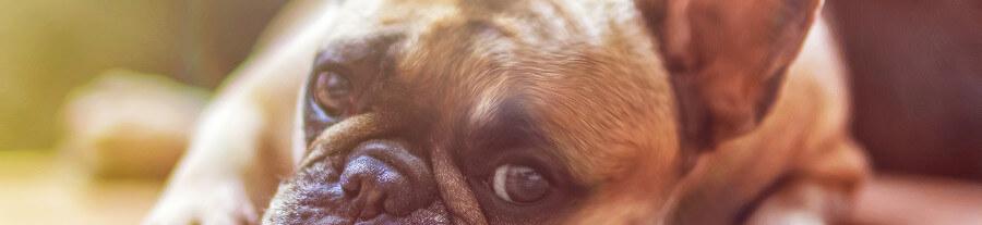 Scandaleux ! Un chien meurt enfermé dans une voiture pendant plusieurs heures