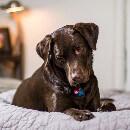 Alimentation mixte pour chien : peut-on mélanger les croquettes avec d'autres aliments ?