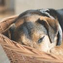 Comment trouver une location de vacances avec animaux acceptés ?