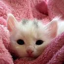 Comment laver un chaton?