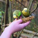 Top 5 des oiseaux faciles à apprivoiser