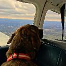 Un homme sauve des centaines d'animaux dans son avion !