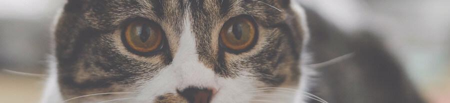 8 causes les plus fréquentes du stress chez le chat