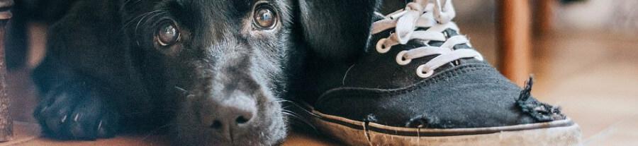 10 meilleures photos du concours « Dog Photographer Of The Year - 2017 » du Kennel Club