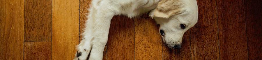 Aidez votre animal à supporter les grandes chaleurs