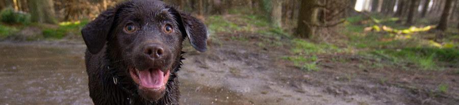 Un chien perdu dans la montagne retrouve ses maîtres après 9 mois de vie sauvage