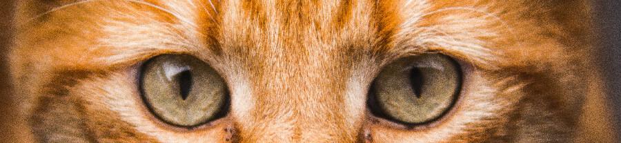 Où et à quel prix peut-on stériliser son chat ?