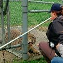 Forma'Zoo, Apprendre le bien-être animal : entretien avec Sasha Goldman, fondatrice du projet