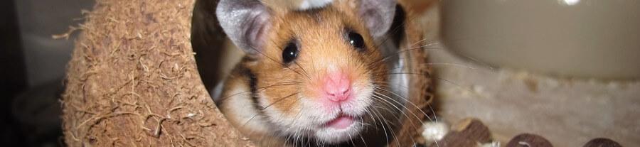 Meilleurs jouets pour hamster