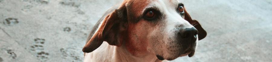 119 animaux de laboratoire sauvés grâce au partenariat du GRAAL et de la SPA