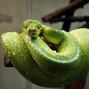 Top 7 des serpents pour débutant