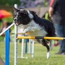 Activités sportives à pratiquer avec votre chien