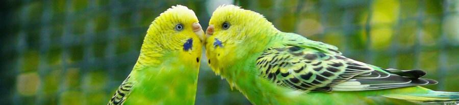 Quels oiseaux choisir pour une volière extérieure ?