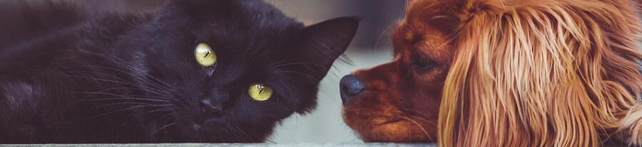Chats, chiens, rongeurs, NAC : comment faire cohabiter vos animaux de compagnie ?