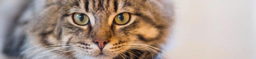 Quand et combien un chat doit-il manger ?