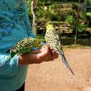 Tout savoir sur l'élevage des oiseaux : EAM, MAN et EPP