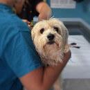 Accueil et prise en charge d'un animal hospitalisé