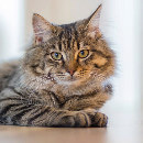 Mon chat éternue : pourquoi et que faire ?
