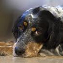 Des chiens au service de l'homme : chiens d'assistance et chiens thérapeutes