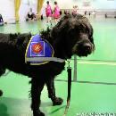 Etre famille d'accueil pour élèves chiens guides : entretien avec Annie Sargent