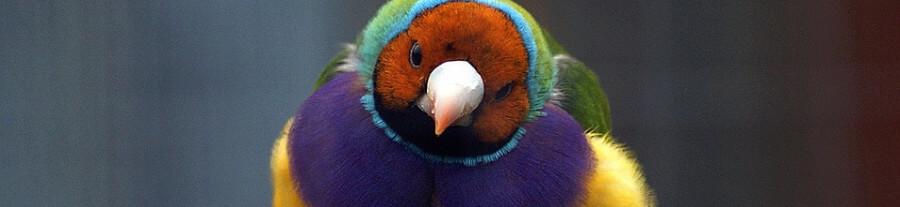 Quel oiseau choisir pour vivre en appartement ?
