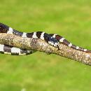 Top 7 serpents domestiques de petite taille