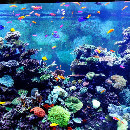 Filtration de l'aquarium : bien choisir son filtre