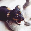 L'anxiété de séparation chez le chien