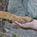 Et si votre animal est gaucher ? (Faites un simple test pour le savoir)