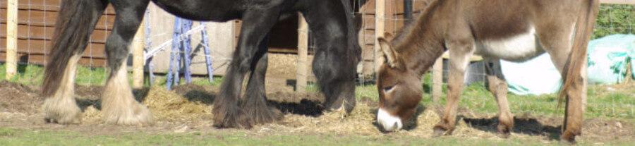 La cohabitation du cheval avec d'autres animaux