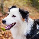 Mon chien boite : causes et solutions