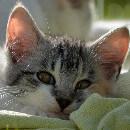 Que faire pour empêcher votre chat de vous réveiller la nuit