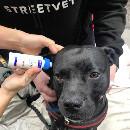 À Londres, les vétérinaires de StreetVet soignent gratuitement les chiens des sans-abri