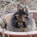 « Histoires vraies : Enzo le lapin », petit livre citoyen pour aider les associations