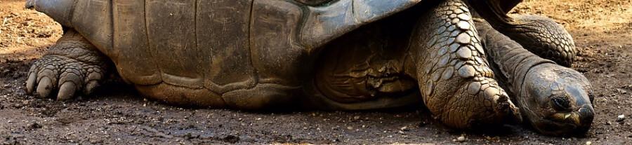 Hibernation des tortues de terre