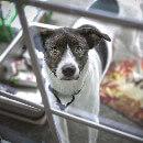 Tout savoir sur les chatières (ou trappes de porte) pour chien