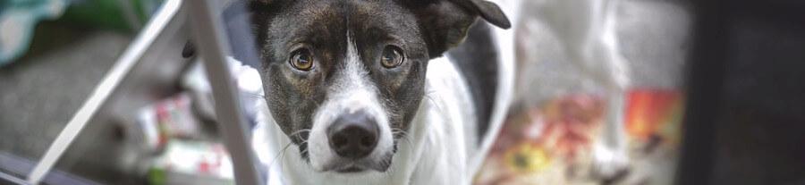 Savoir Sur Les Chatières Ou Trappes De Porte Pour Chien - Porte pour chien
