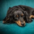 L'épilepsie chez le chien et le chat : symptômes et traitement