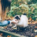 Tout savoir sur les distributeurs de croquettes pour chat