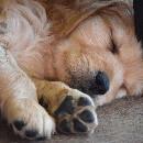 Comment prendre soin des coussinets de son chien ?