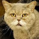 5 idées fausses sur les chats âgés