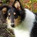 Un pelage brillant et en bonne santé chez le chien : mode d'emploi