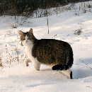 Comment savoir si son chat a froid ?